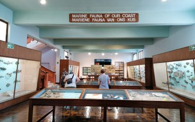 Discover our Museum